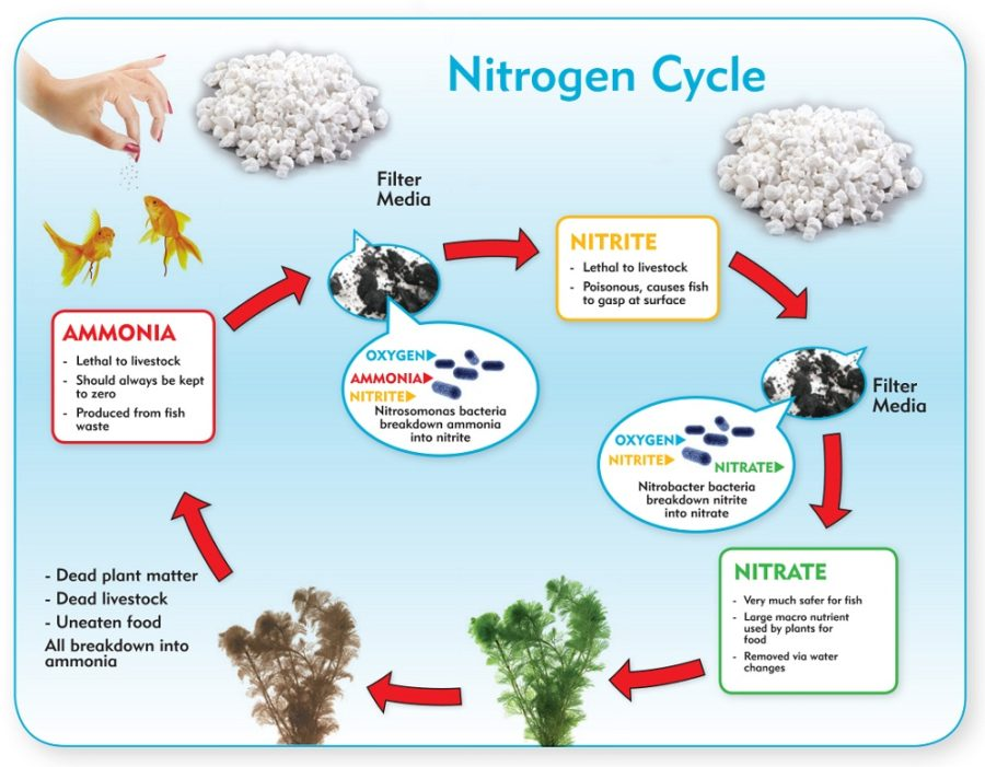 nitrogen cycle diagram aquarium