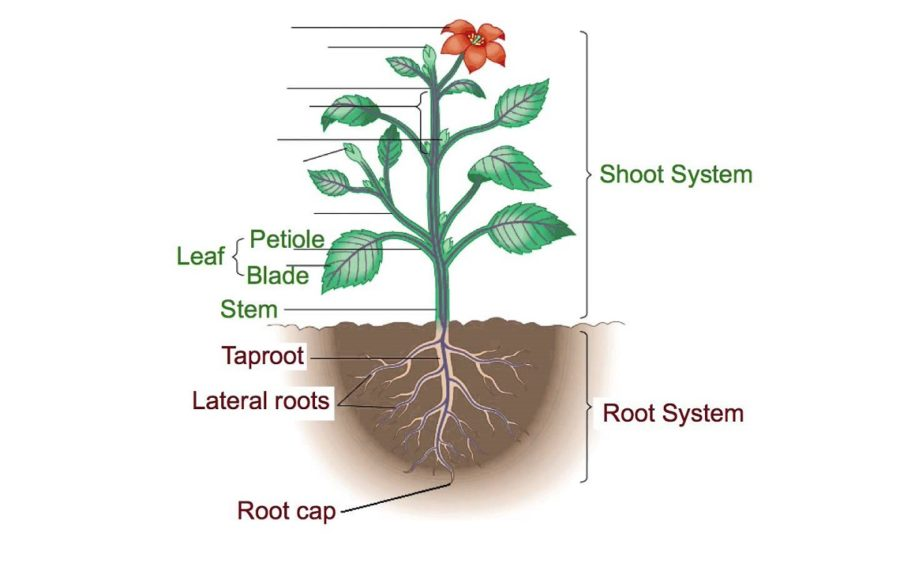 parts of a plant diagram page