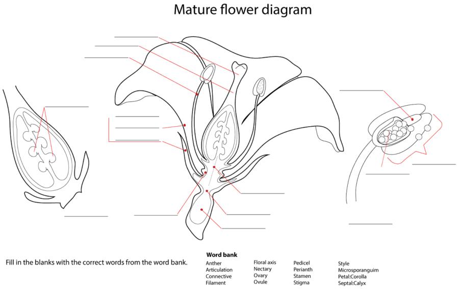 diagram of flower blank
