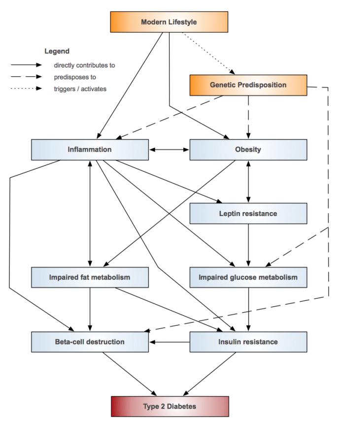 immune system diagram labeled