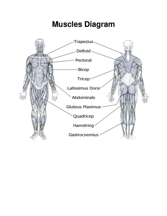 muscles diagram printable