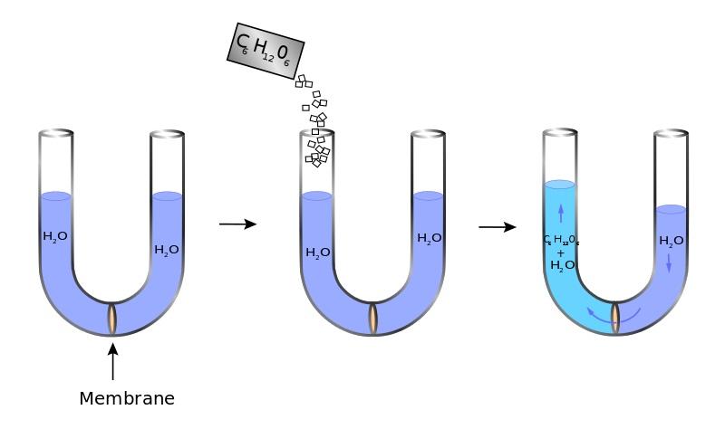 osmosis diagram example