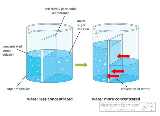 osmosis diagram works
