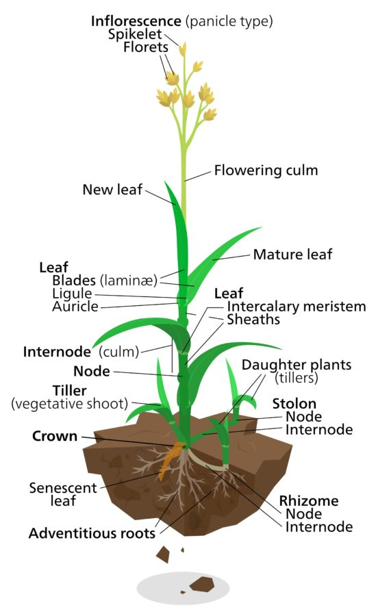 plant diagram labeled