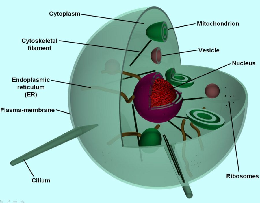 red blood cell diagram labeled