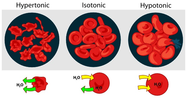 red blood cell diagram type