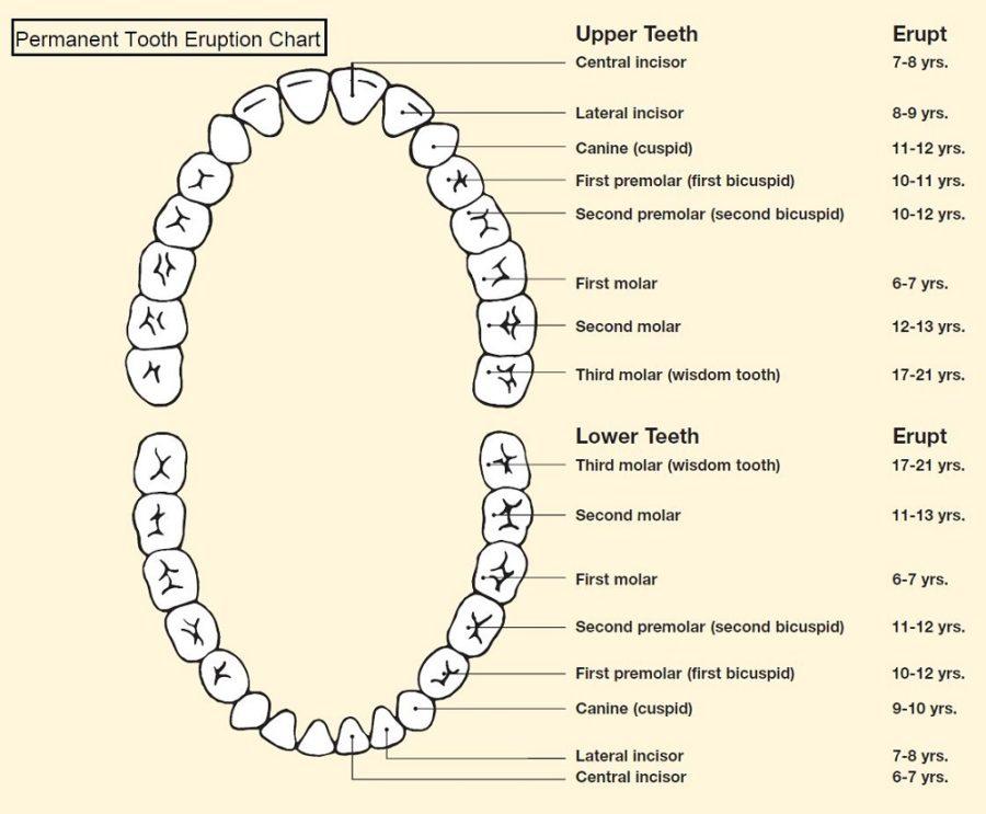 dental diagram page