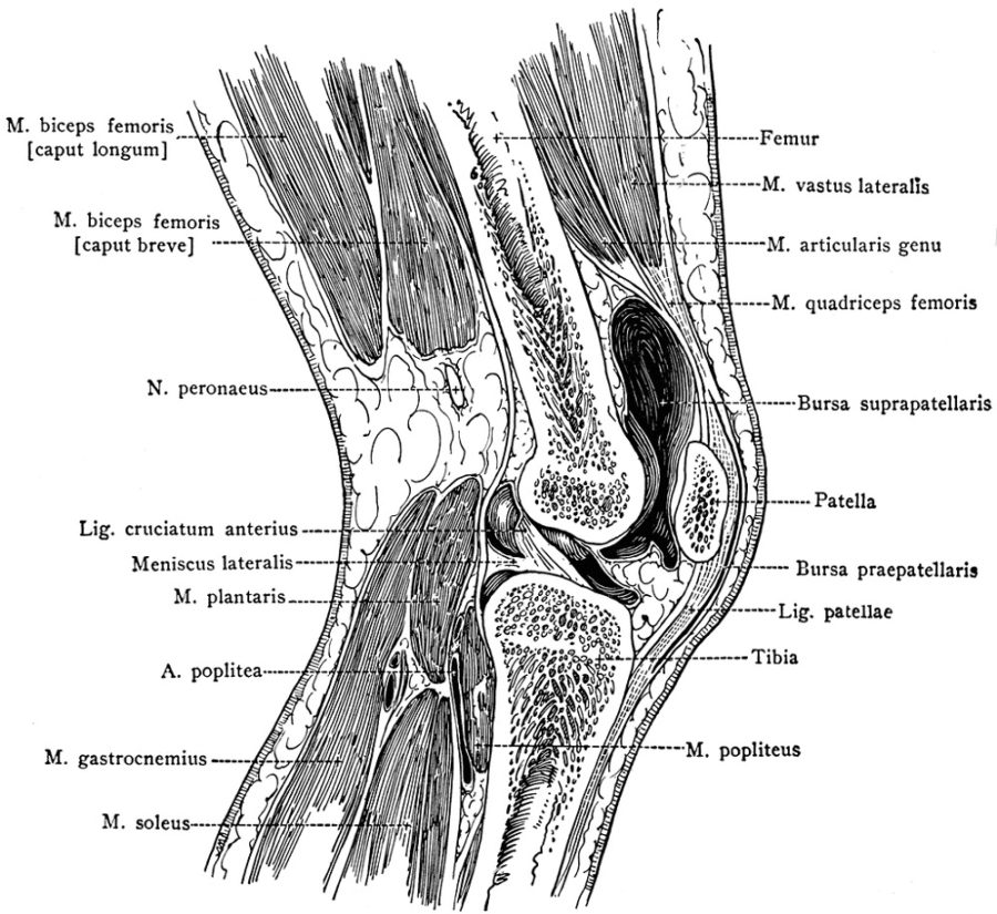 diagram of knee complete