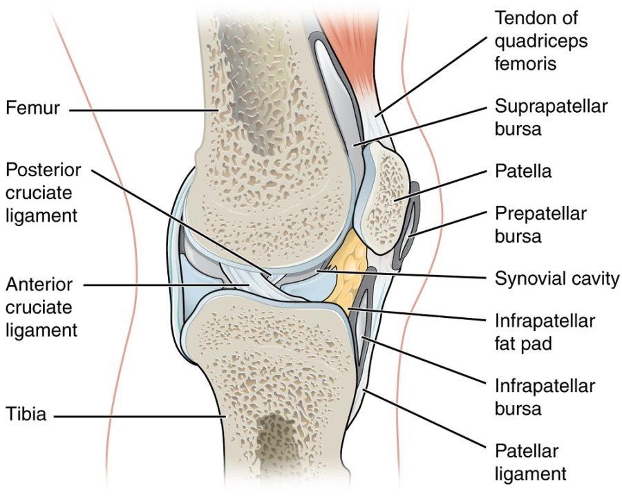 diagram of knee detail