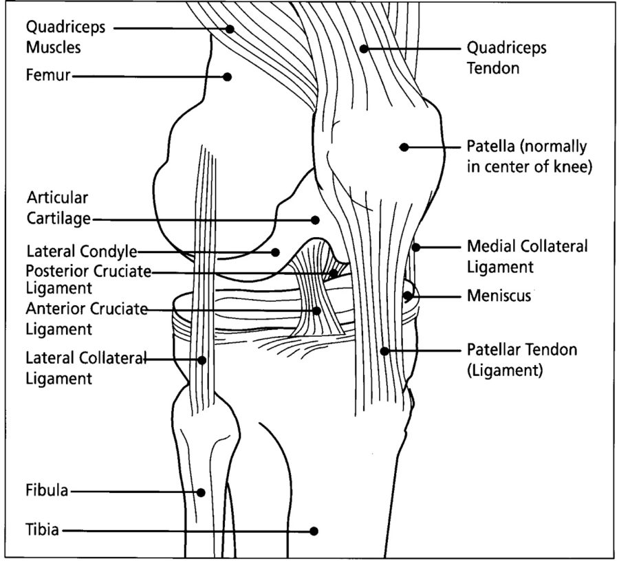 diagram of knee page
