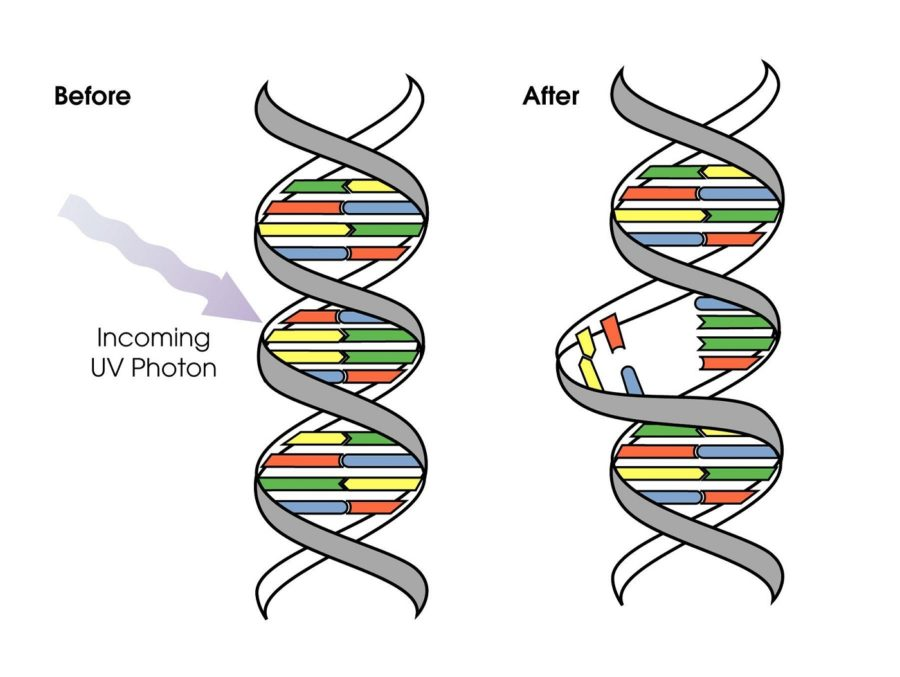 dna diagram mutation