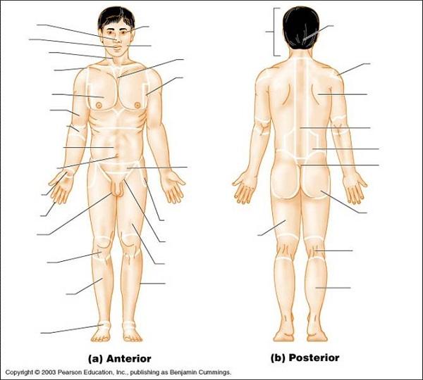 free body diagram blank