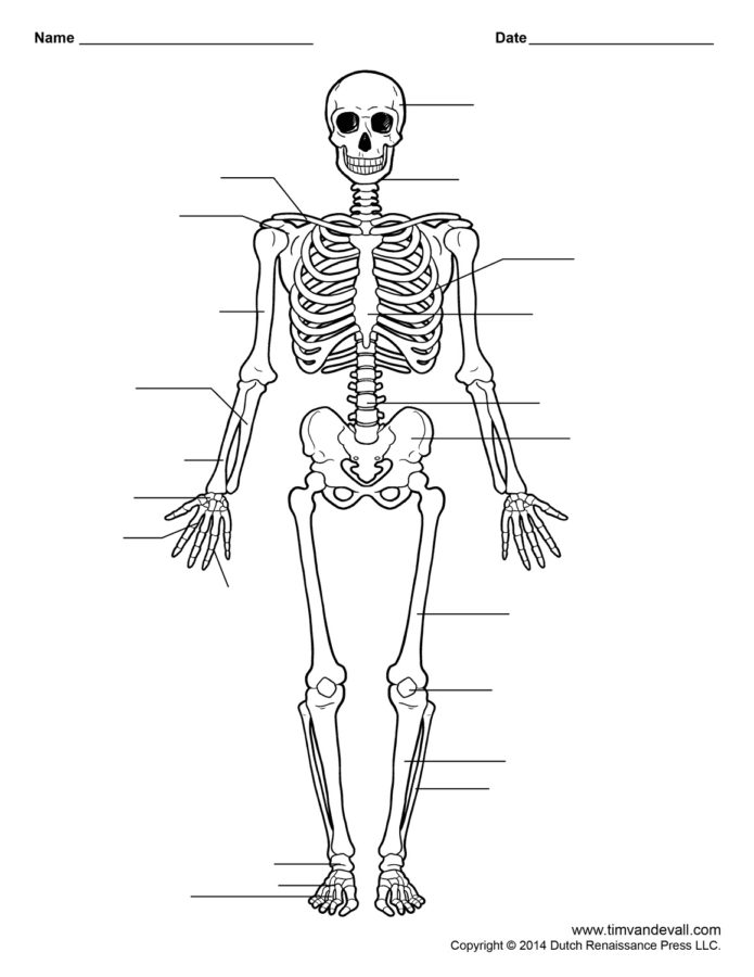 free body diagram unlabeled