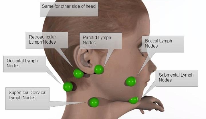 lymph nodes diagram head