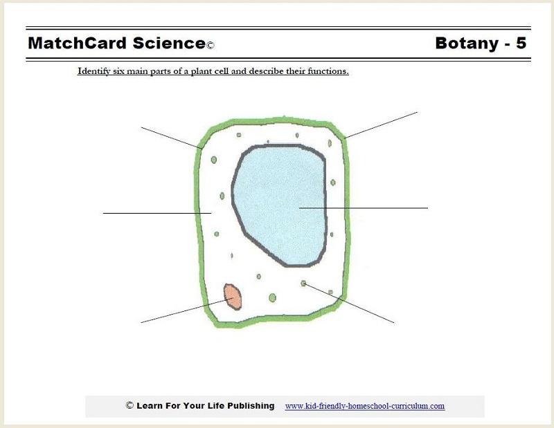 plant cell diagram for kids worksheet