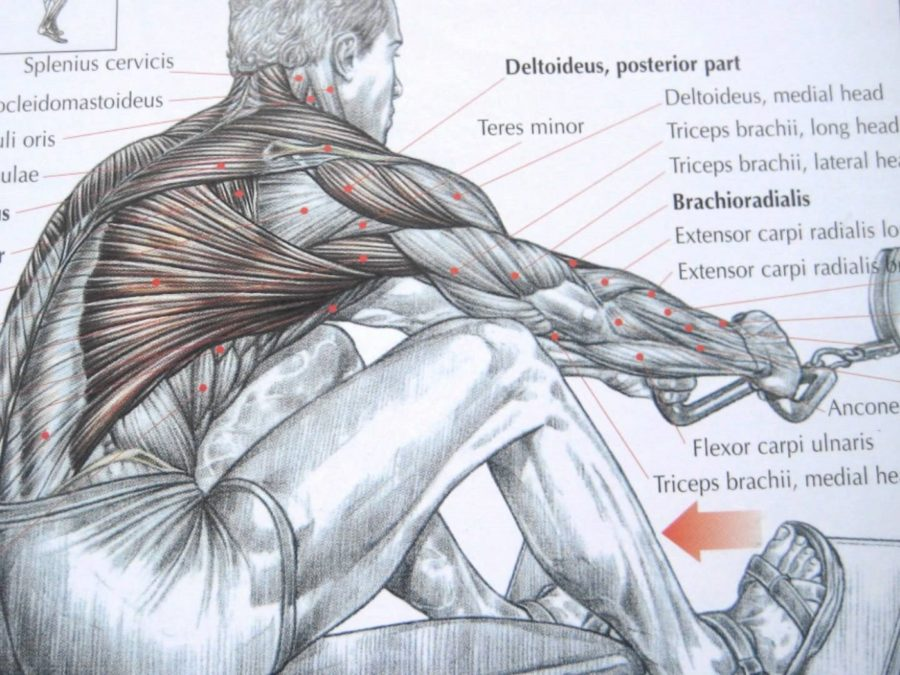 Back Muscles Diagram Workout