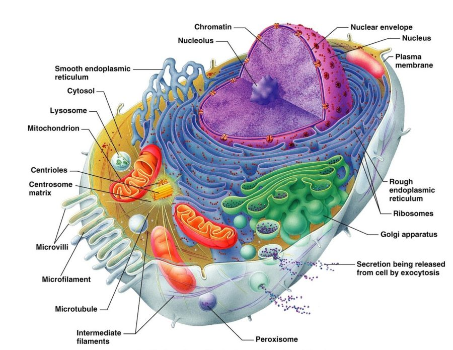 Diagram of a Cell and Its Parts