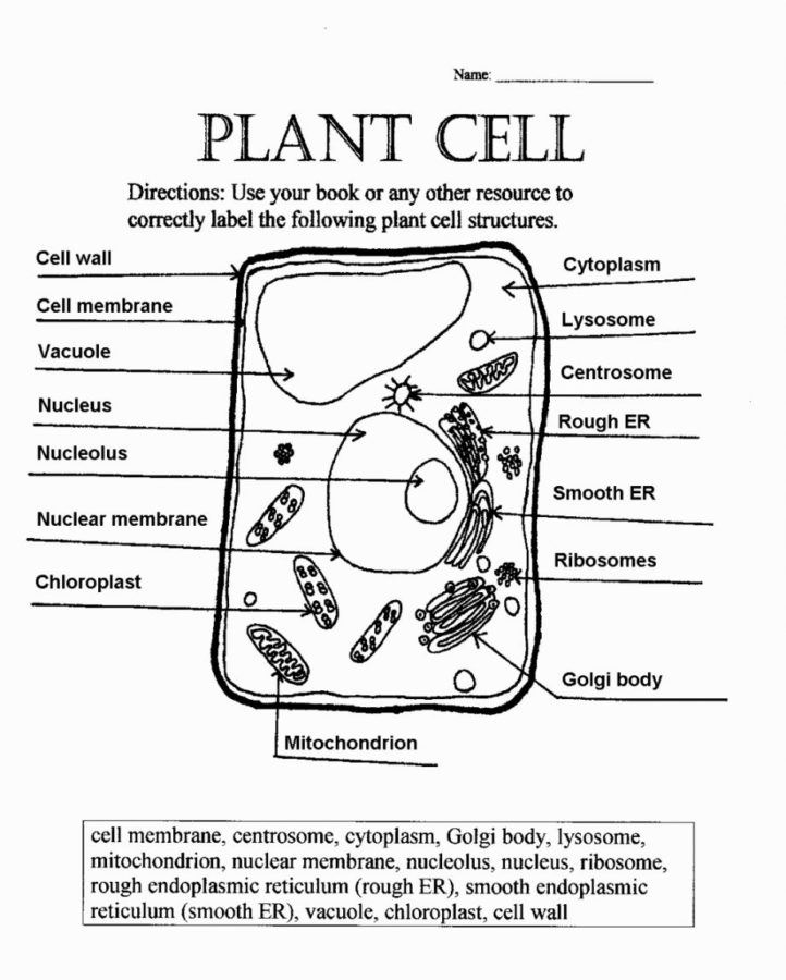 Diagram of a plant cell worksheet