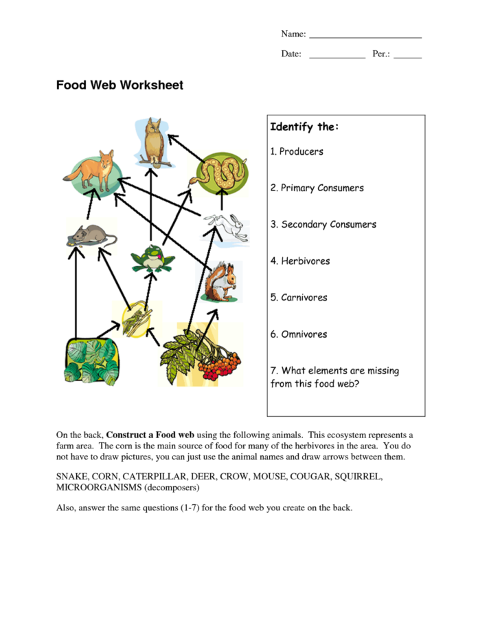 Food Web Diagram Worksheet