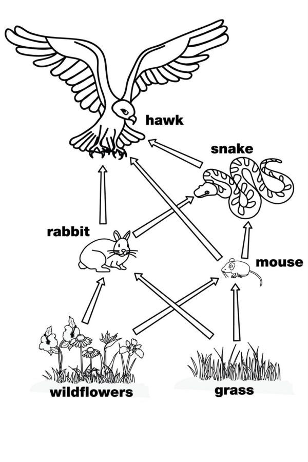 Simple Food Web Diagram