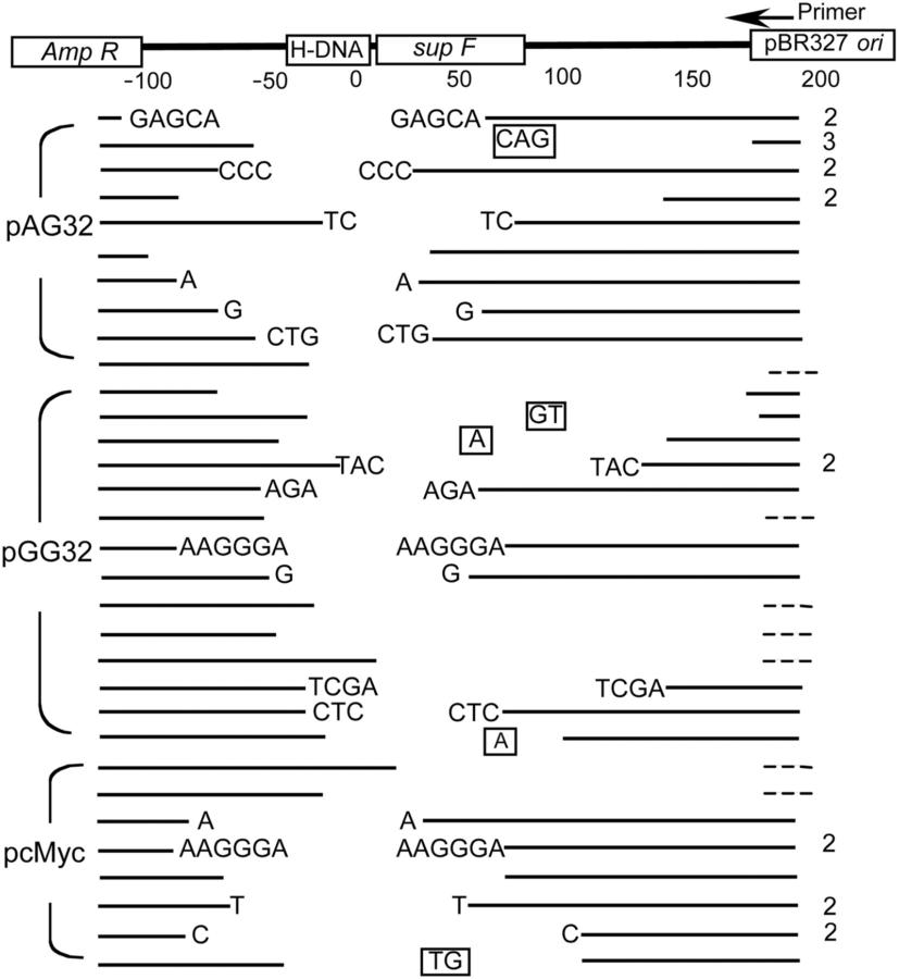Blank Chromosome Diagram
