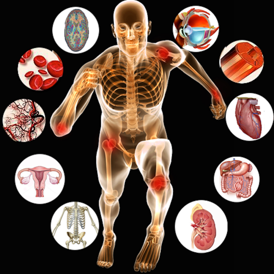 Human Body Organs Diagram L R