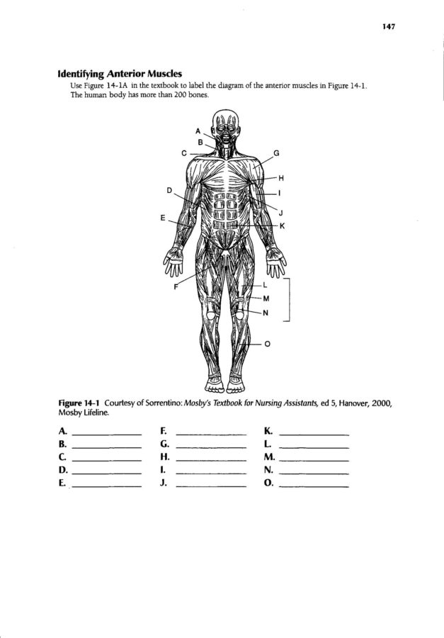Human body muscle diagram worksheet