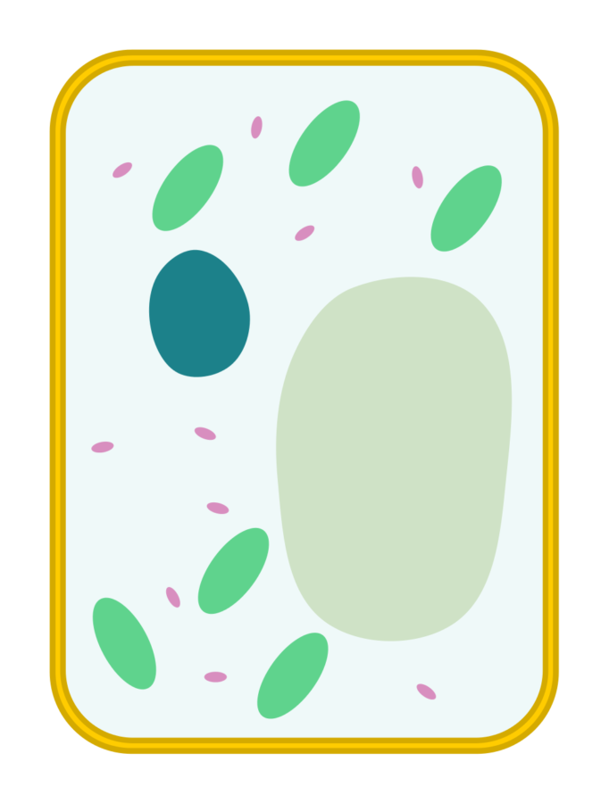 Blank plant cell diagram for kids