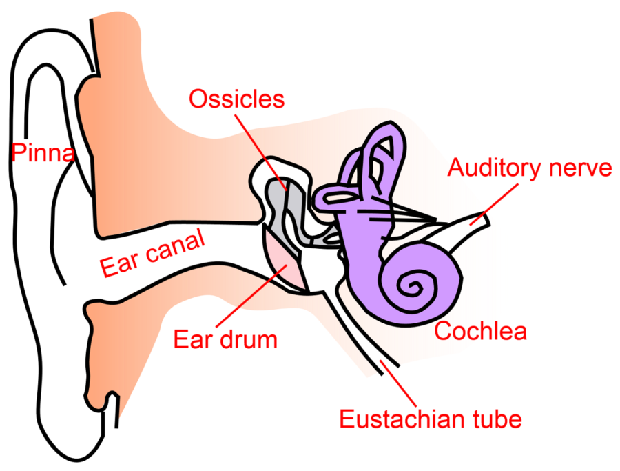 Diagram of Ear Transparent Background
