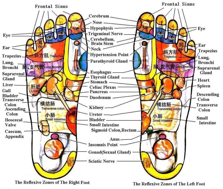 Diagram of Foot reflexology