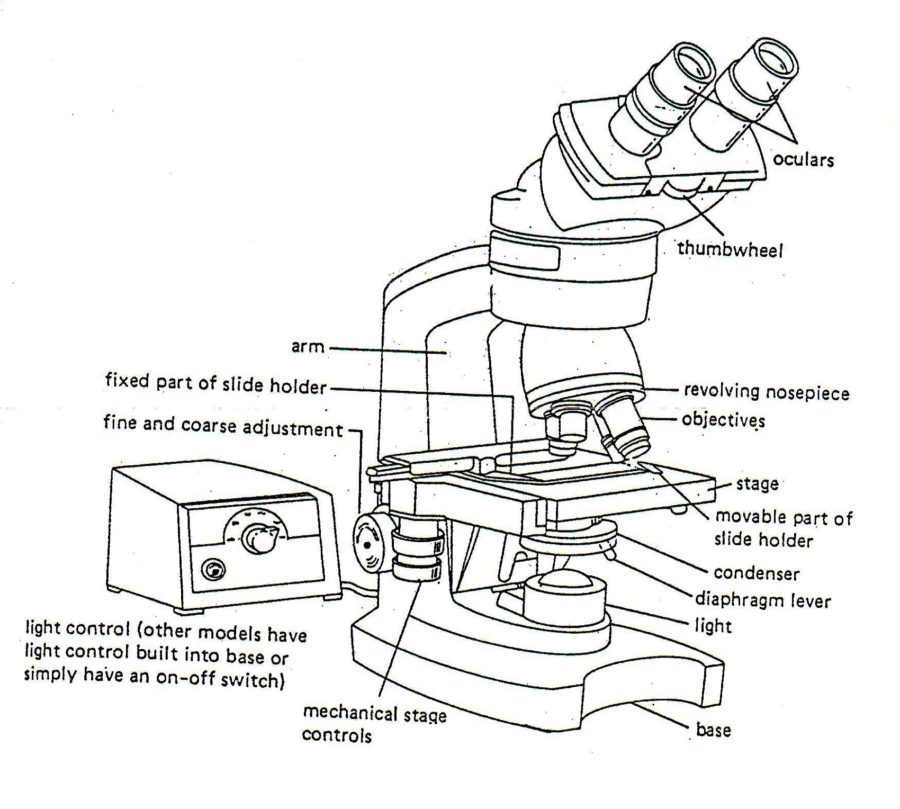 Diagram of Microscope Parts and Function