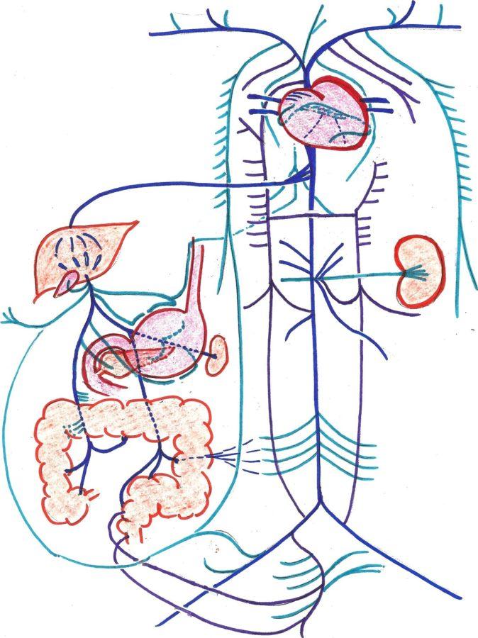 Diagram of nervous system Blank