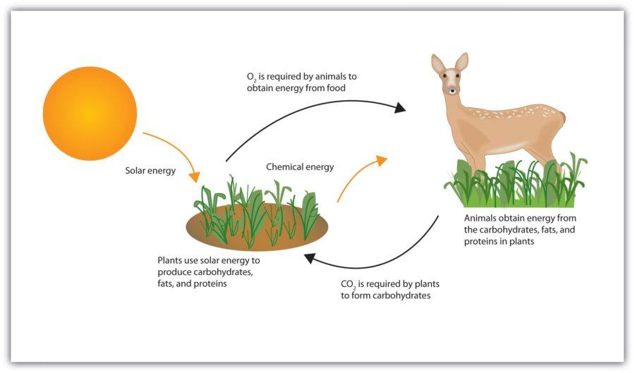 Energy Diagram Biology