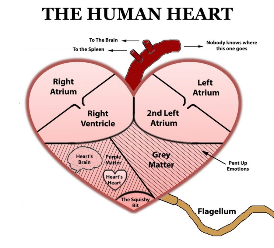Real Labeled Diagram of The Heart
