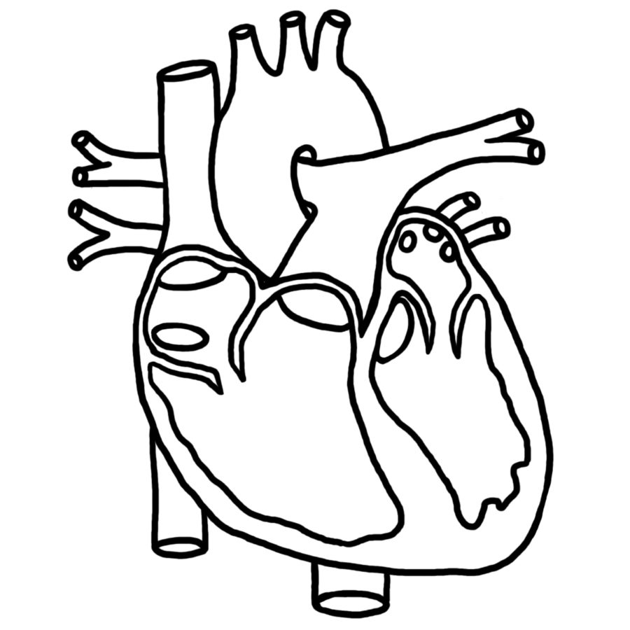 Diagram of a Heart Black and White