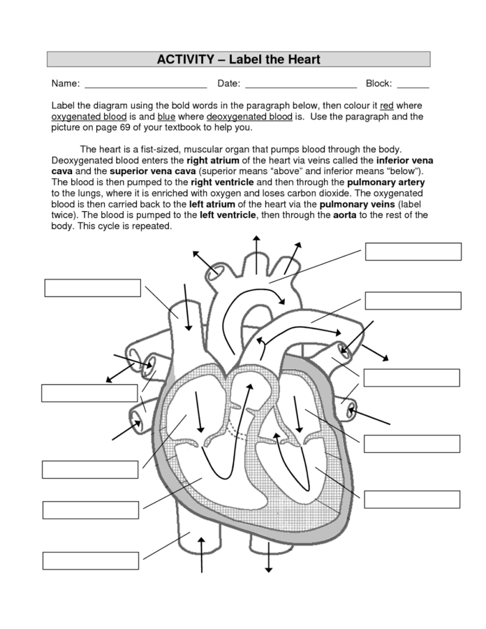 The Heart Diagram Worksheet