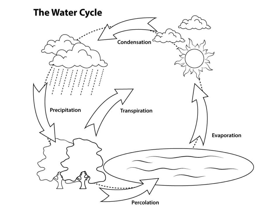 The Water Cycle Diagram 5th Grade