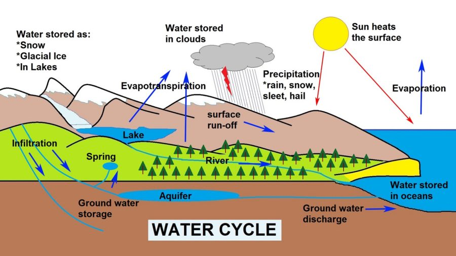 The Water Cycle Diagram Interactive