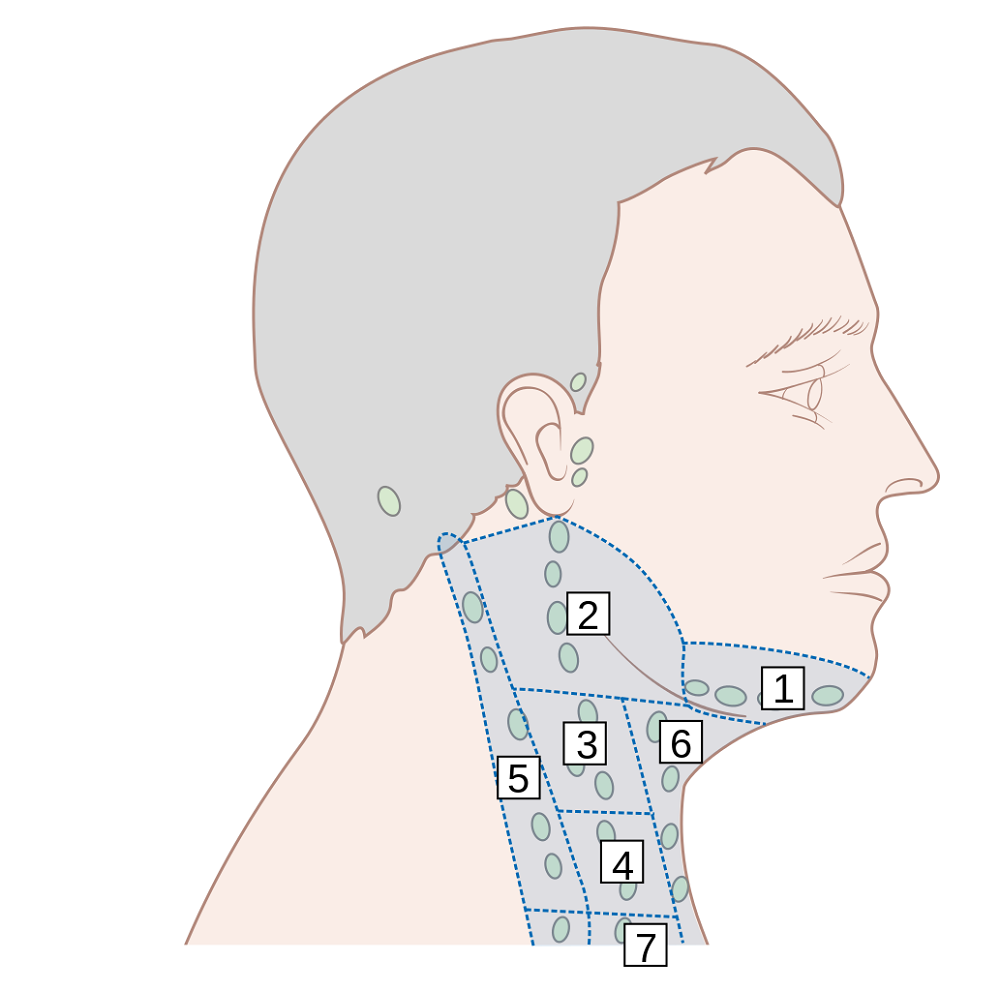 Lymph Nodes in Neck Diagram
