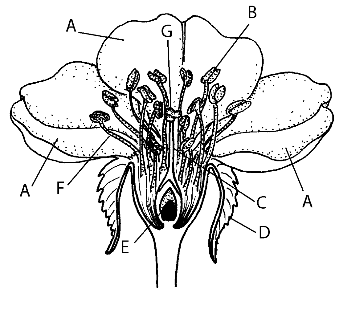 Parts of a Plant Diagram Blank