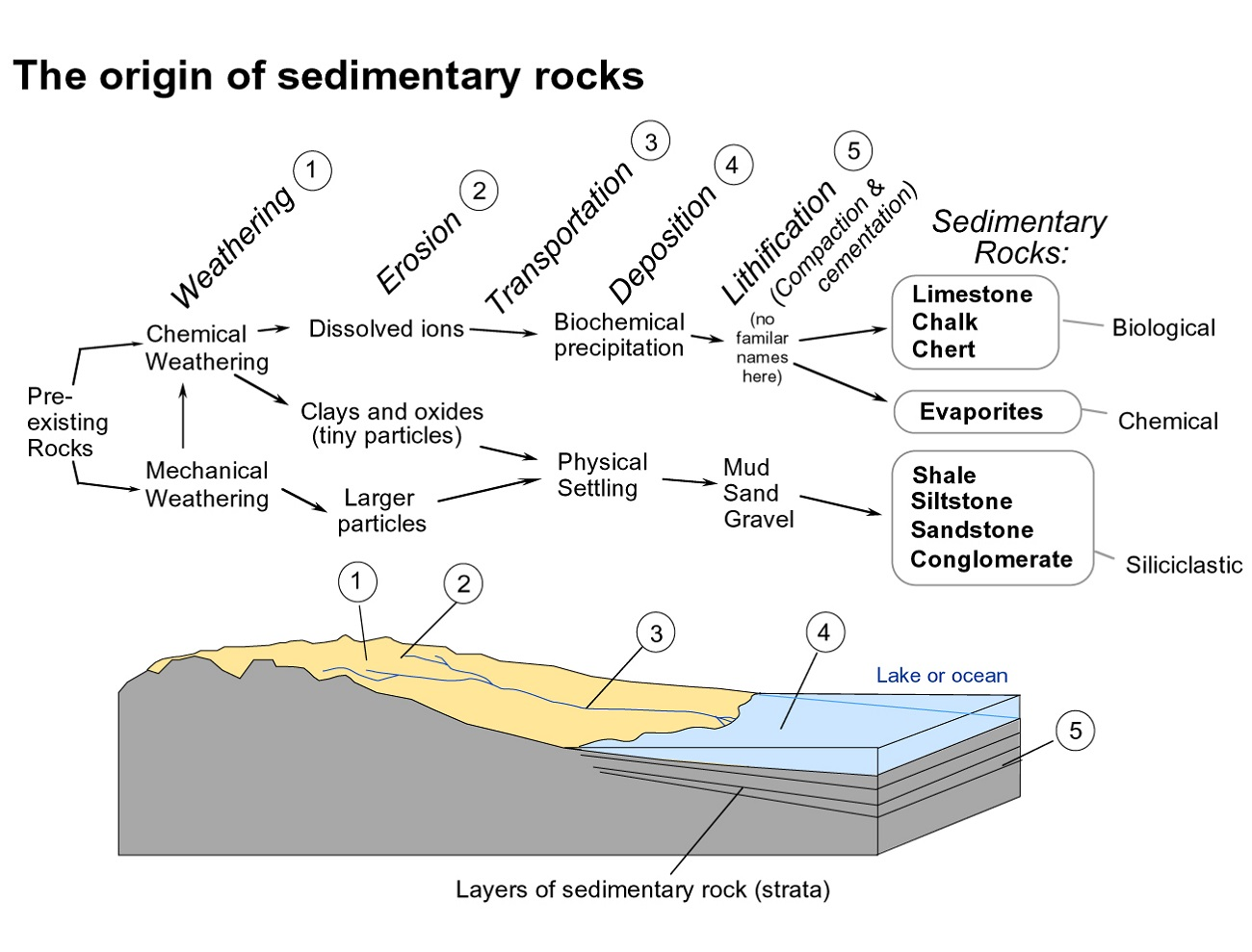 The Rock Cycle Diagram Sedimentary
