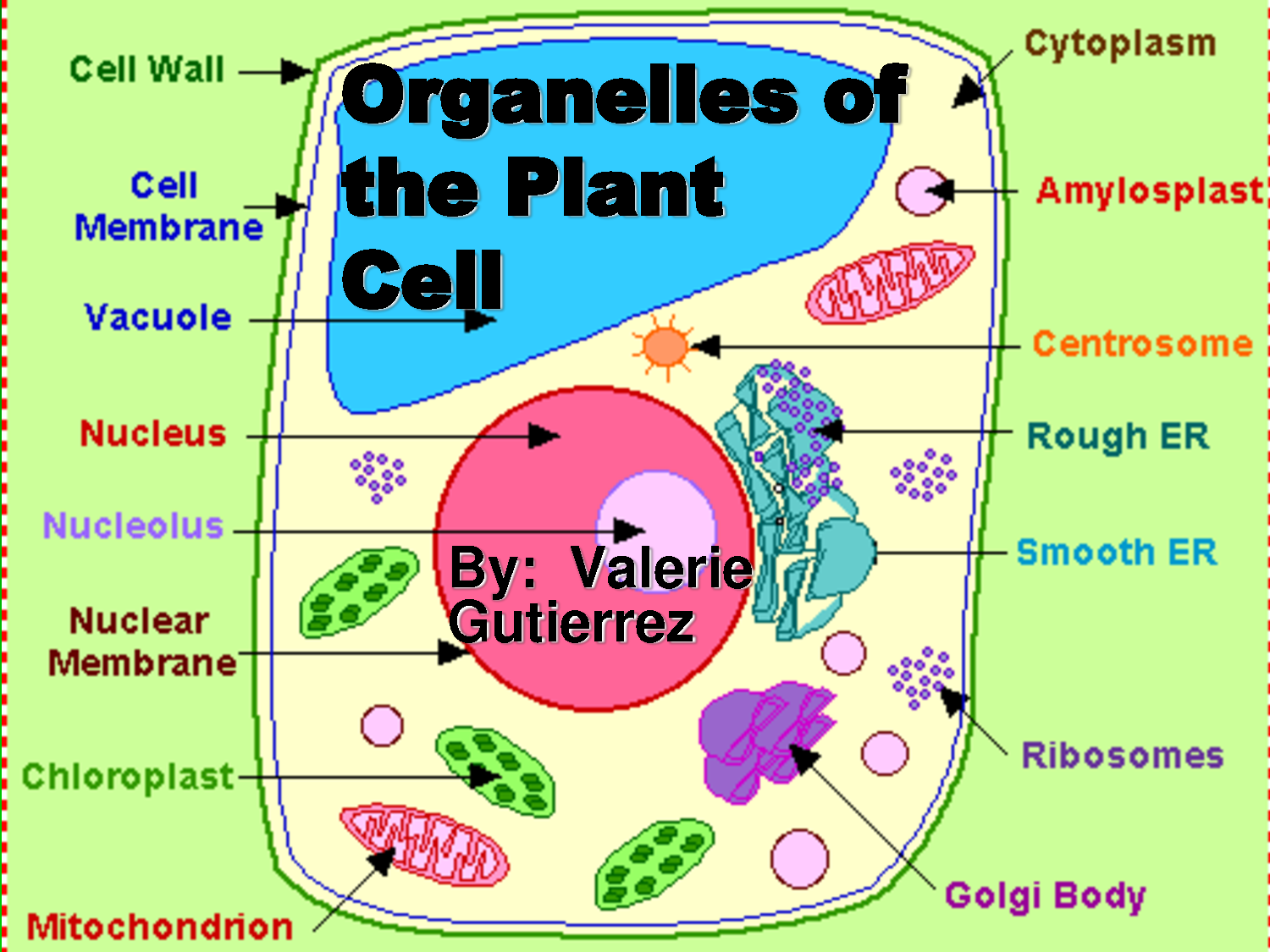Plant Cell Diagram Labeled for 7th Graders